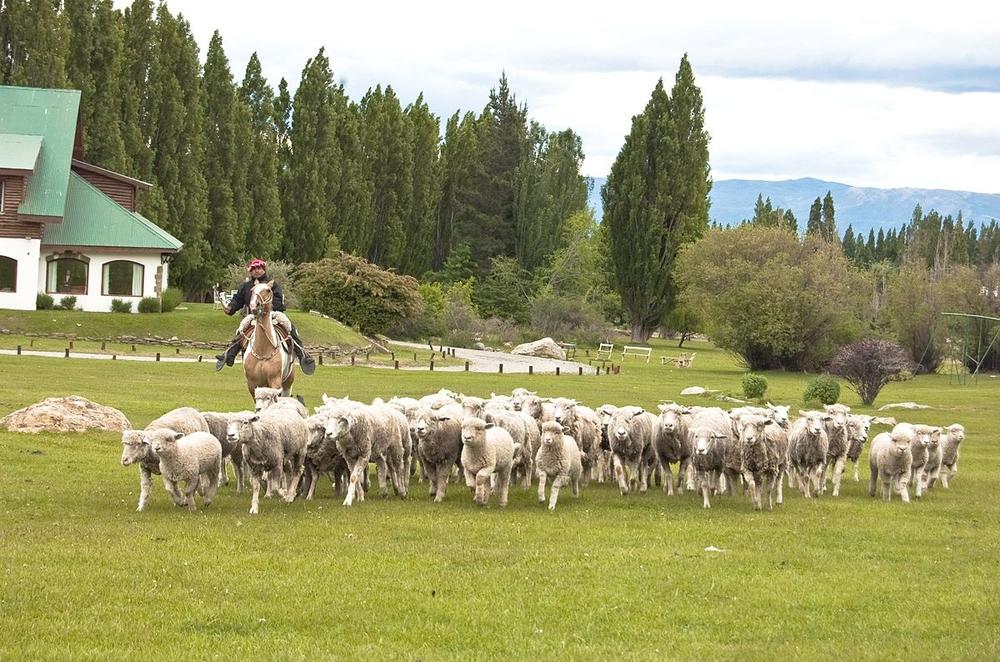 Сельское хозяйство в Аргентине