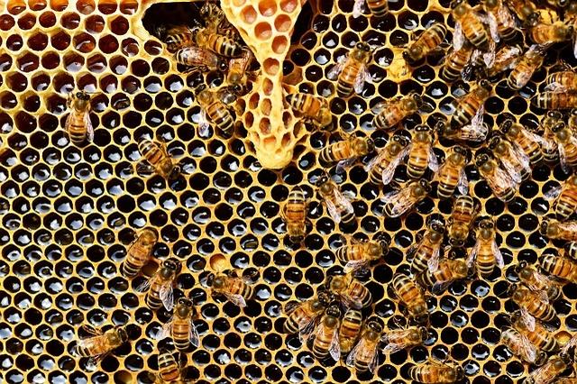 защита пчел от клещей