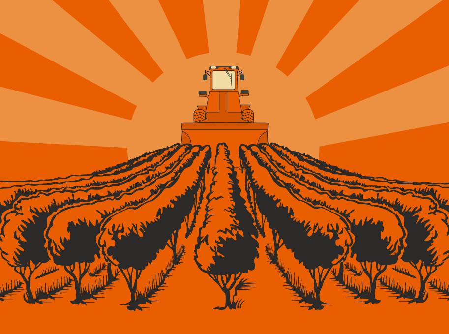 трактор выкорчевал виноградники в Одесской области