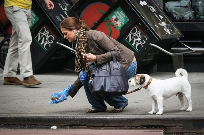 шведская принцесса убирает за собакой