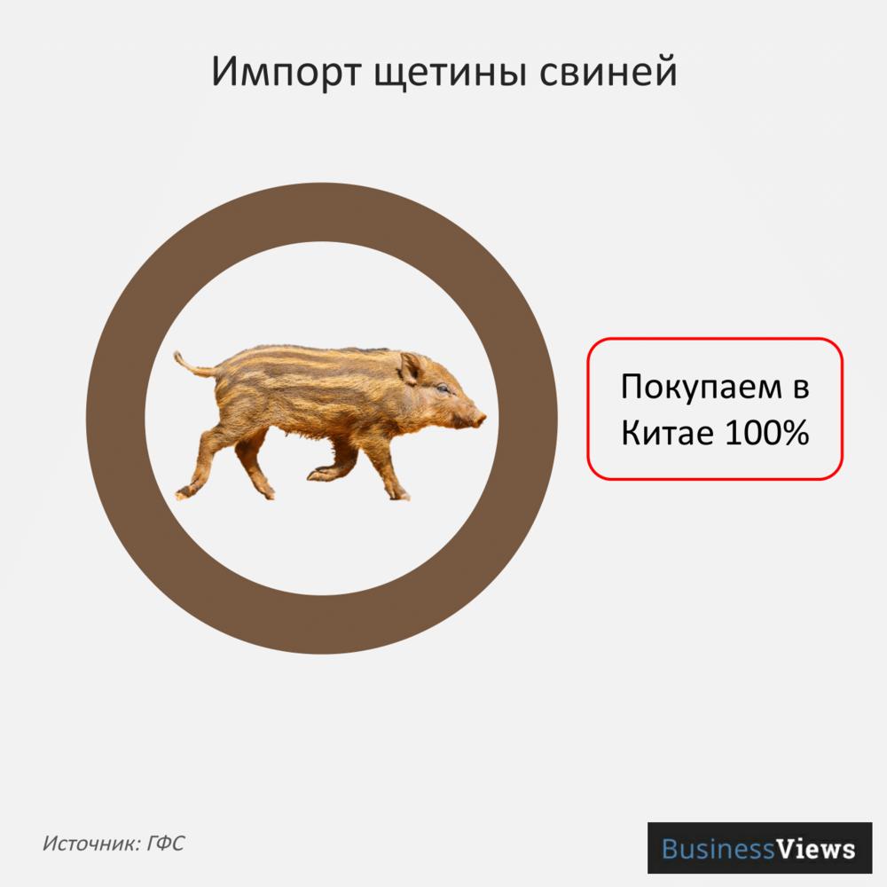 Импорт щетины свиней
