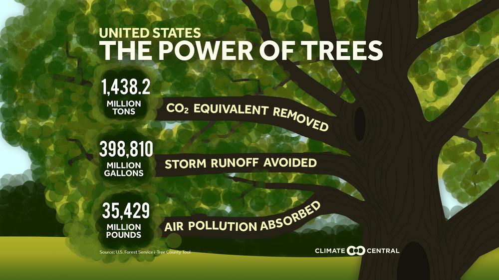 чому дерева важливі