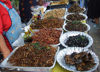 Почему нам скоро придется есть насекомых?