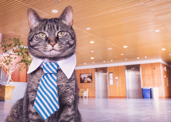 4 признака ужасного босса