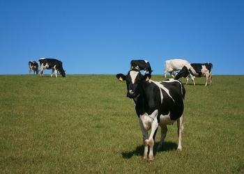 Корова вызовет себе доктора через Twitter. 3 крутых способа применить сенсоры в сельском хозяйстве