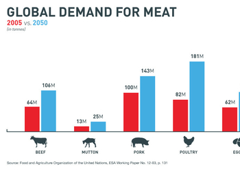 8 удивительных фактов о мясе из лаборатории