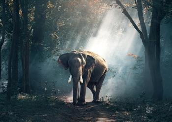 Как продать ручку, пылесос или даже слона кому угодно: 3 главных принципа успешных продаж