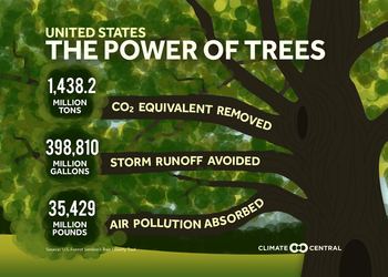 Як ліси та дерева в містах рятують життя та економіку