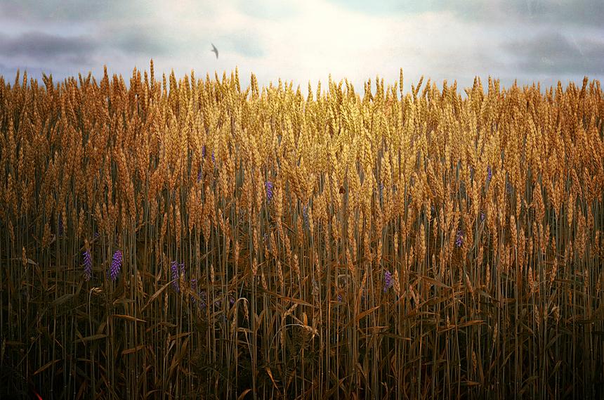 Майбутнє українського агробізнесу забезпечить ефективний менеджмент, а не чорноземи