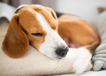 Відповіді на 6 важливих запитань про сон, які потрібно знати, щоб залишатись здоровим
