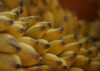 Как в Коста-Рике собирают бананы